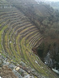 terraced vineyard.jpg